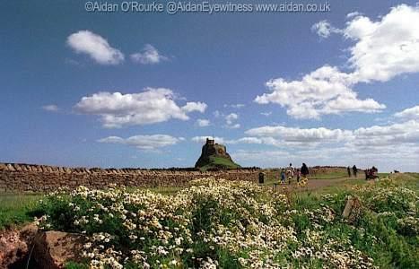 Lindisfarne Holy Island with flowers
