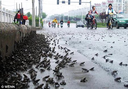 1000s of toads flee polluted river in China