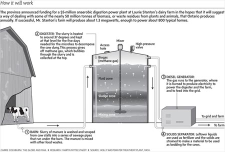 Basic Large-scale Biodigester Lay-out