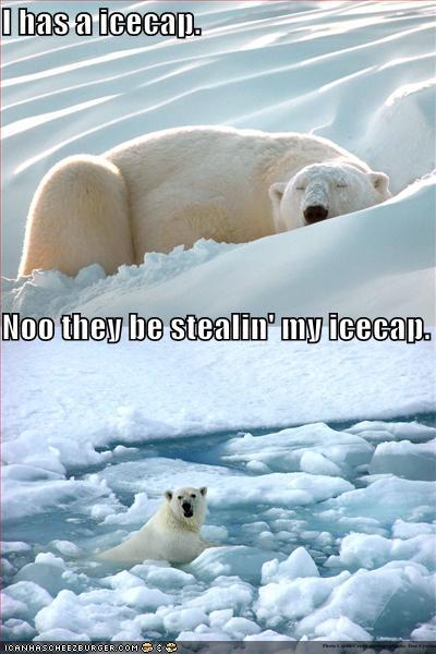 LOLcat Polarbear: Noo, they be stealin' my icecap