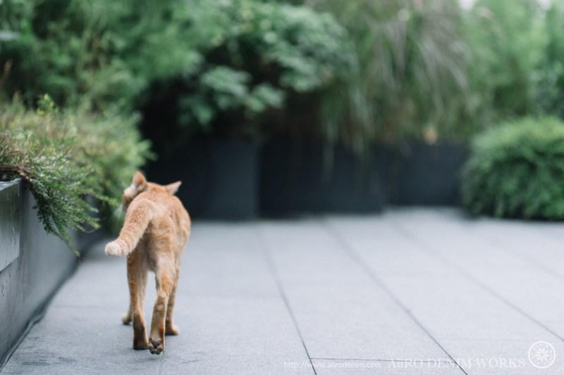 写真ーご近所猫