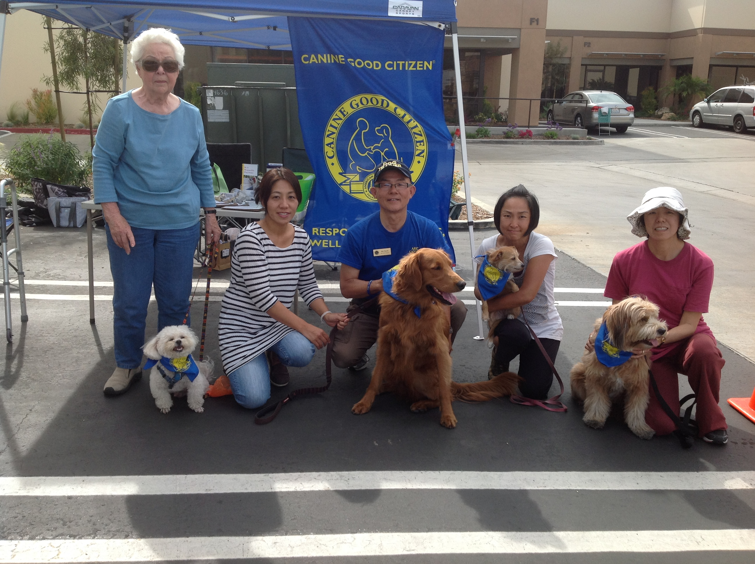 Therapy Dog Training Classes California