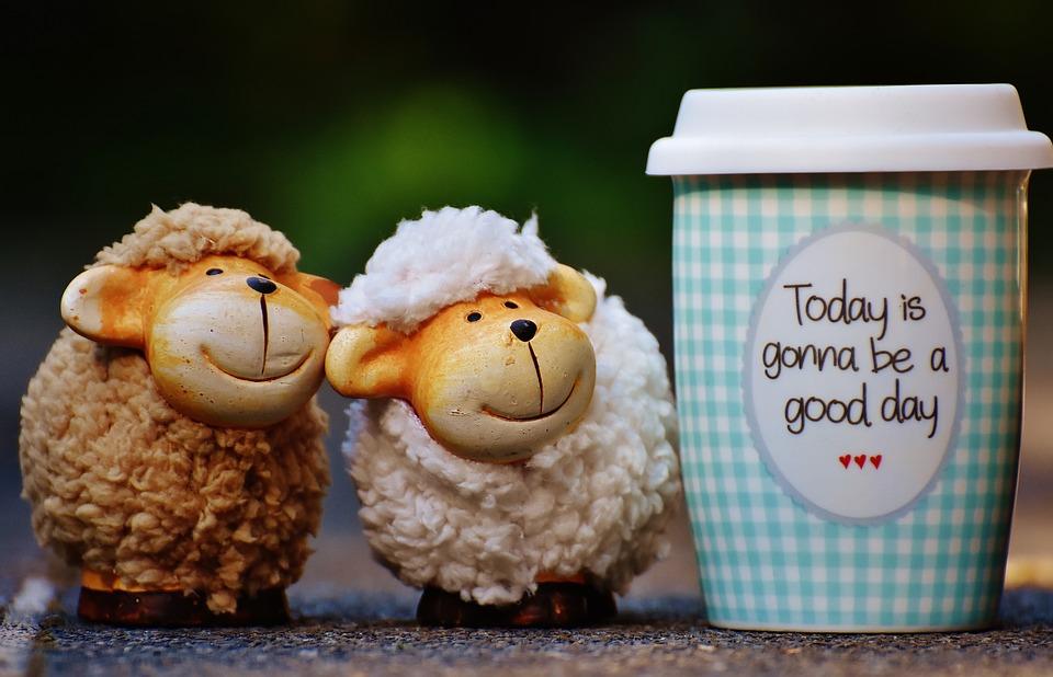 sheep-1644144_960_720