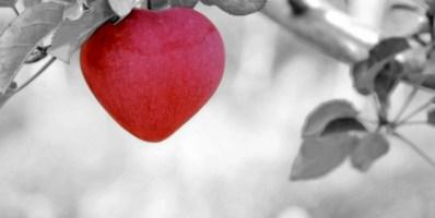 Ciò che impressiona il cuore, non si scorda mai