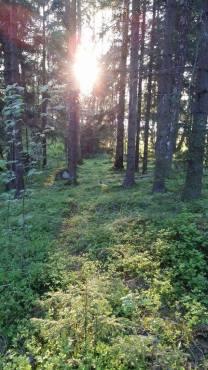 AV_puut_metsä