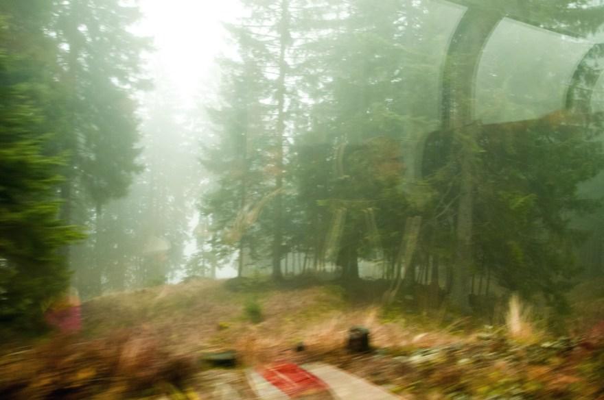 Pinudi bat zeharkatzen (Crossing a pine forest)