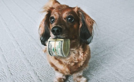 Nicholas Aiola, CPA - How Your Pet Can Help Lower Your Tax Bill - Dog With Money