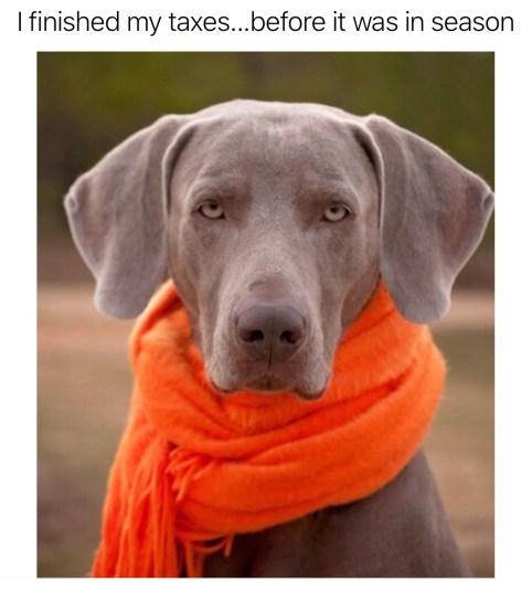 Nicholas Aiola, CPA - Tax Time Meme Dump - Stylish Dog