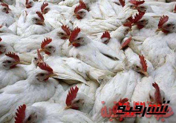 بيطري الشرقية ينظم دورات مكثفة للتحذير من الأنفلونزا H5N8