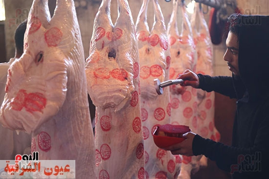 تفاصيل ختم اللحوم بالمجازر الحكومية