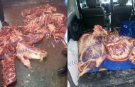 أمن قسنطينة  يحجز 180  كغ من اللحوم الحمراء   غير صالحة للاستهلاك بوسط المدينة