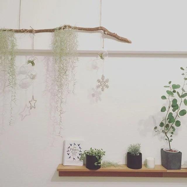 エアーにも冬が近付いてきました。#冬#クリスマス#プライベートスタジオエアー #マンツーマンレッスン #ヨガ#ピラティス#福岡 #植物は銀色メイン #エアープランツ#流木 (Instagram)