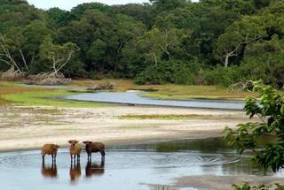 Tassi Savannah Camp - Red Forest Buffalo
