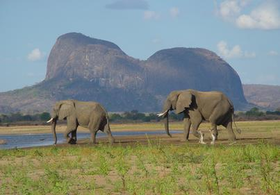Elephants at Inselberg