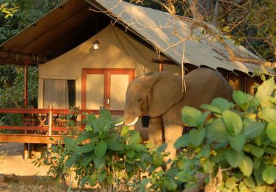 Tent and Elephant at Lugenda