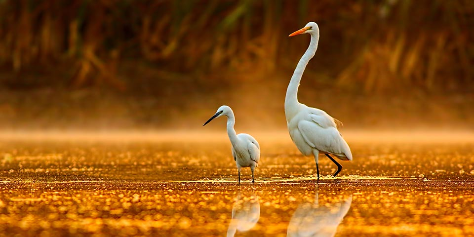 5 popular questions about everglades