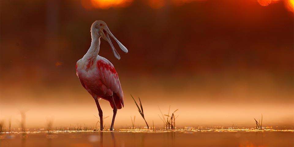 everglades birds 04