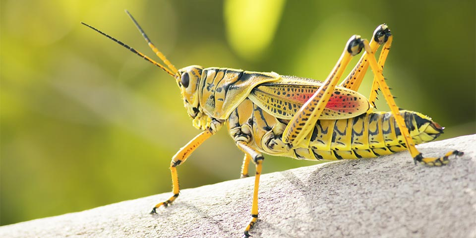 everglades insects 01