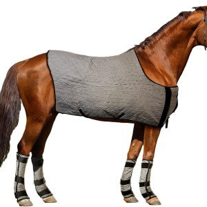 Pets and Equestrian