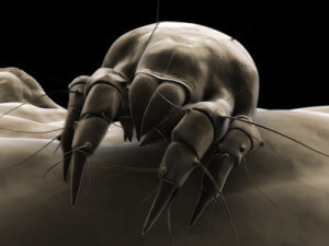 deposit photos black and white dust mite 400x300