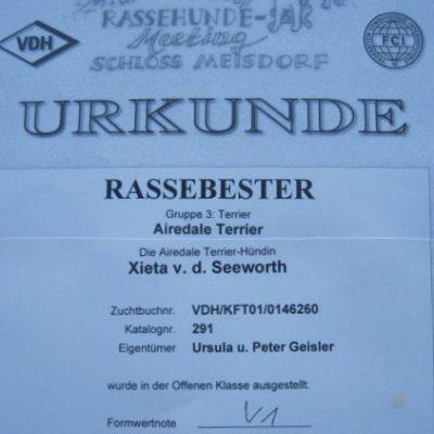 XIETA v.d.Seeworth wieder bester Airedale der Rassehundeschau.