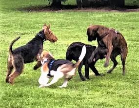 Hundeplatzbesuch in Leverkusen