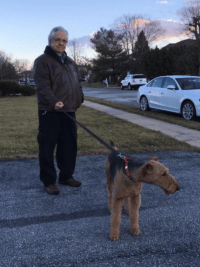 Casey Airedale with his dad