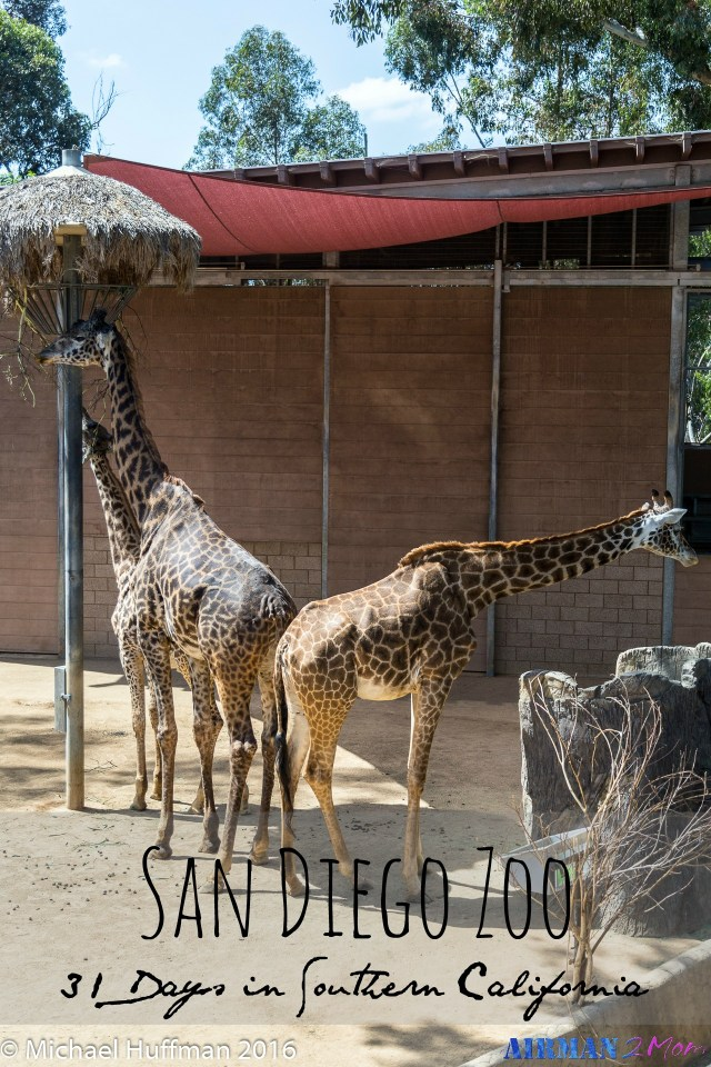 The San Diego Zoo is a great place to see so many different animals and have a fun family day.