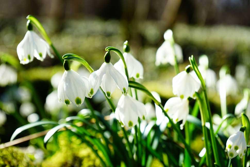 printemps airnounou
