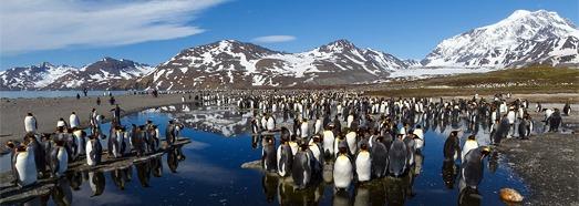 Ανταρκτική, Νότια Γεωργία Νησί - AirPano.com • 360 μοιρών Εναέρια Πανόραμα • 3D Virtual Tours σε όλο τον κόσμο