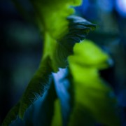 Blue an green