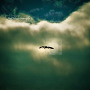 I want to fly away