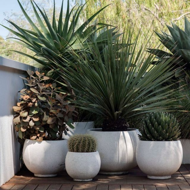 small-backyard-ideas-potted-plants