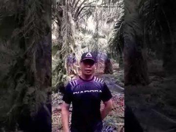 Dato Jamal Kini Menyorok Dalam Ladang Sawit Takut DiTahan Polis