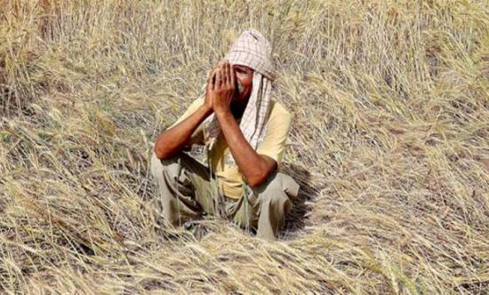 Agrarian crisis in India