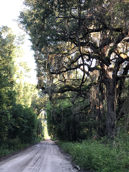In the land of live oaks and Spanish moss