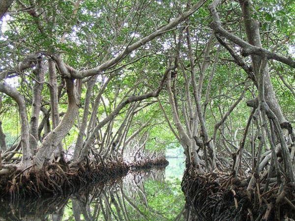 Ramree Island, Battle, Hindi, Story, History, Kahnai, Itihas, Information, Janakri,
