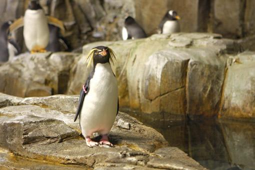 PINGUIN NO BIODOME MONTREAL