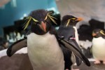 Rockhopper Sea World