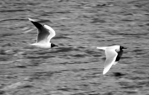 Isla Chiloe Birdwatching