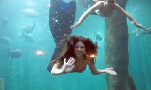 Sereia aquario sao paulo
