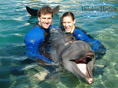 nada com golfinhos - foto miami seaquarium