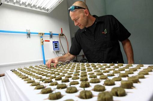 Marijuana Resort (foto Miami Herald)