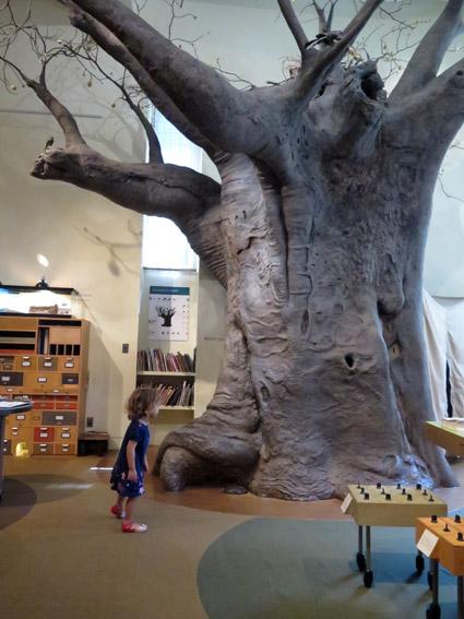 As Laranjinhas em NY - Arvore Museu de História Natural