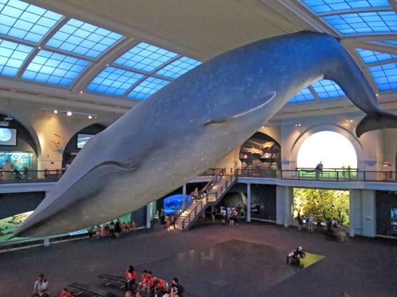 As Laranjinhas em NY - Baleia do Museu de História Natural
