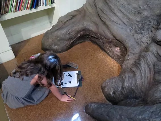 As Laranjinhas em NY - Vivi Museu de História Natural