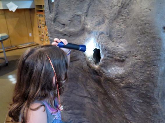 As Laranjinhas em NY - Vivi lanterna Museu de História Natural