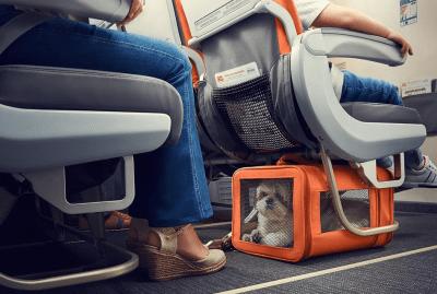 Cachorro no aviao