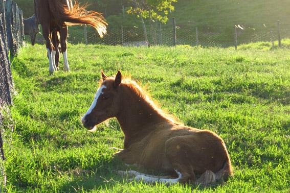 cavalo-fazenda-capoava