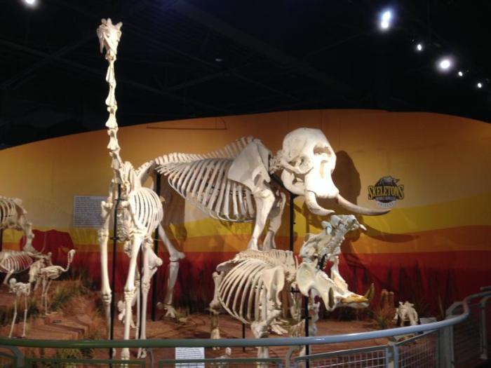 o museu Skeletons: Animals Unveiled